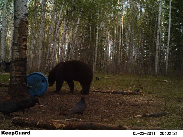 Trail Pic of Coltons Bear