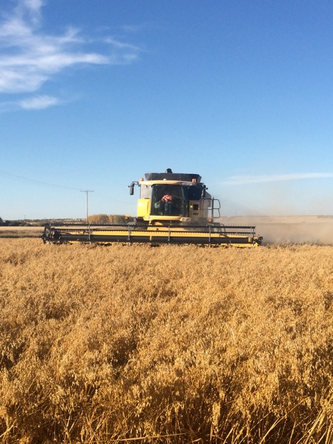 Custom Combining some oats