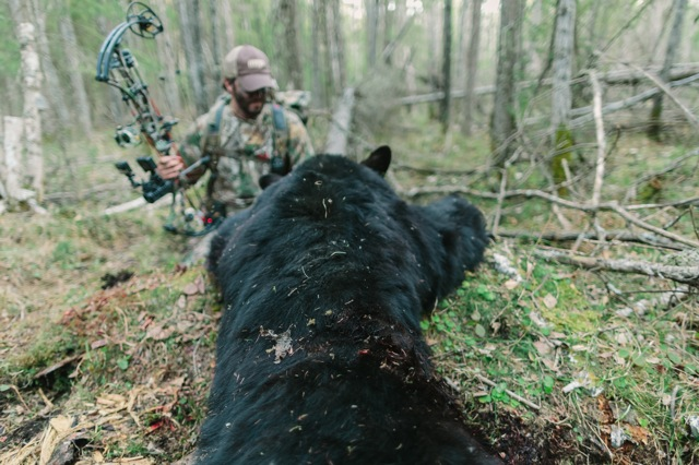 second bear down!!