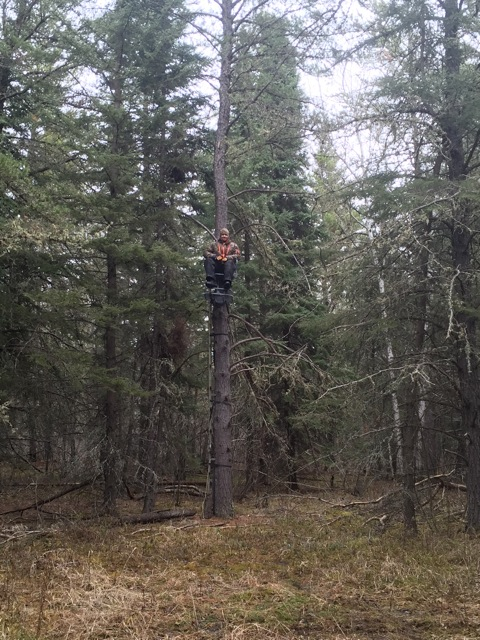 Corey testing out the tree stands