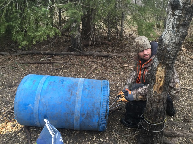 corey wiring the barrel of bait to the tree